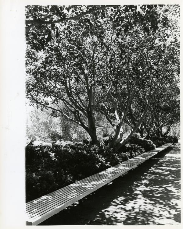 View of long bench under trees