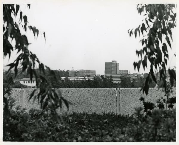 View of UCLA campus buildings through trees, May 1963