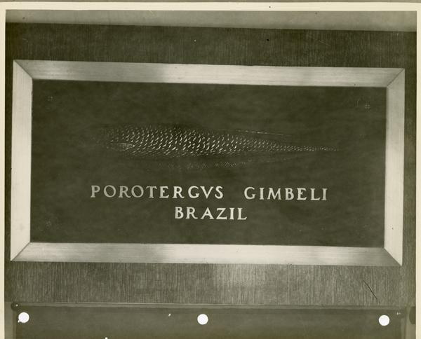 Close up of bas relief of the Porotergus Gimbeli Brazil at the base of the flagpole at the center of the Royce Quad