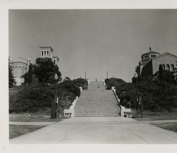 View of Janss Steps, Royce Hall, and Powell Library, August 1951