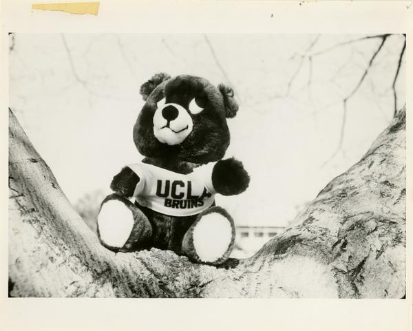 UCLA Bruin stuffed animal