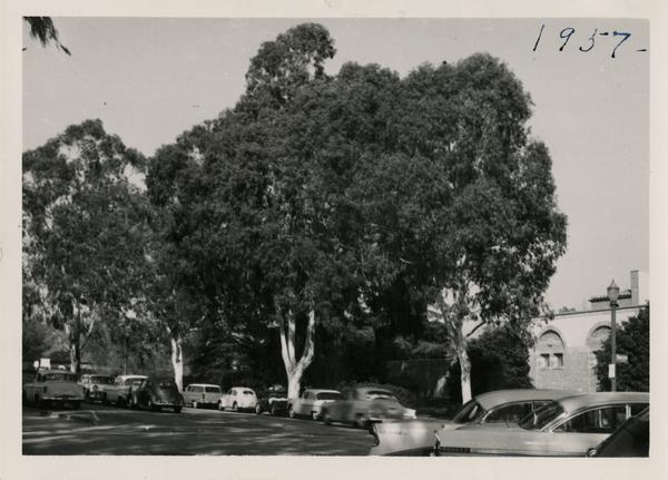 View of President's Row, ca. 1957