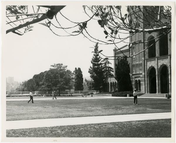 View of quad and lawn in front of Royce Hall, ca. 1965