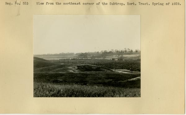 View from the northeast corner of the Subtropical Horticulture Tract, Spring of 1929