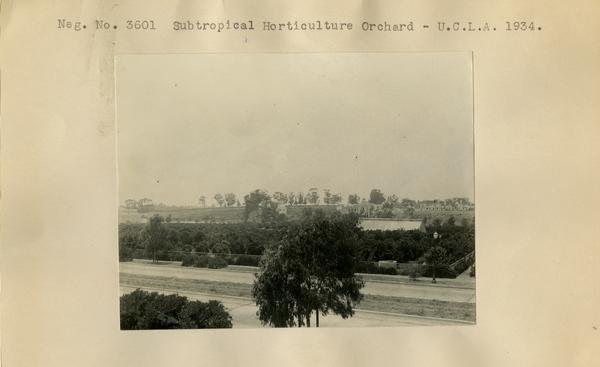 Subtropical Horticulture orchard, ca. 1934