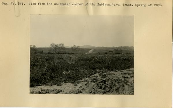 View from southeast corner of the Subtropical Horticulture Tract, ca. Spring 1929