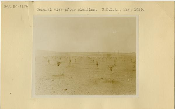 General view after planting, ca. May 1929