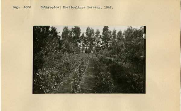 Subtropical Horticulture Nursery, ca. 1942