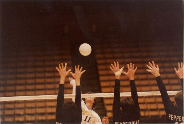UCLA volleyball player spiking the ball over the net during a game with members of opposing team attempting to block, 1983