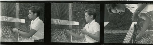 Various shots of a student working with wire fencing for a project