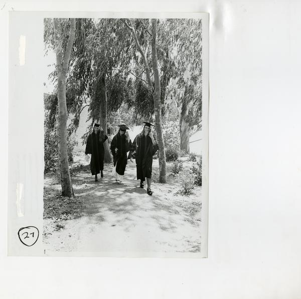 Three graduates in full regalia walking along path
