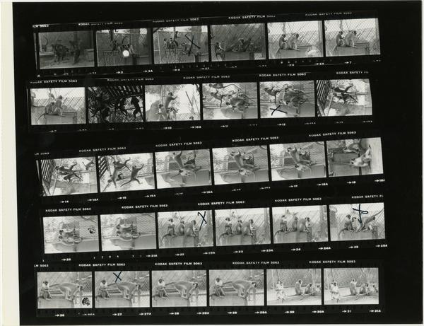 Contact sheet of monkeys