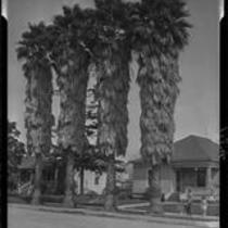 Clapboard houses and palm trees, Santa Monica, 1928