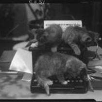 Kittens on typewriter